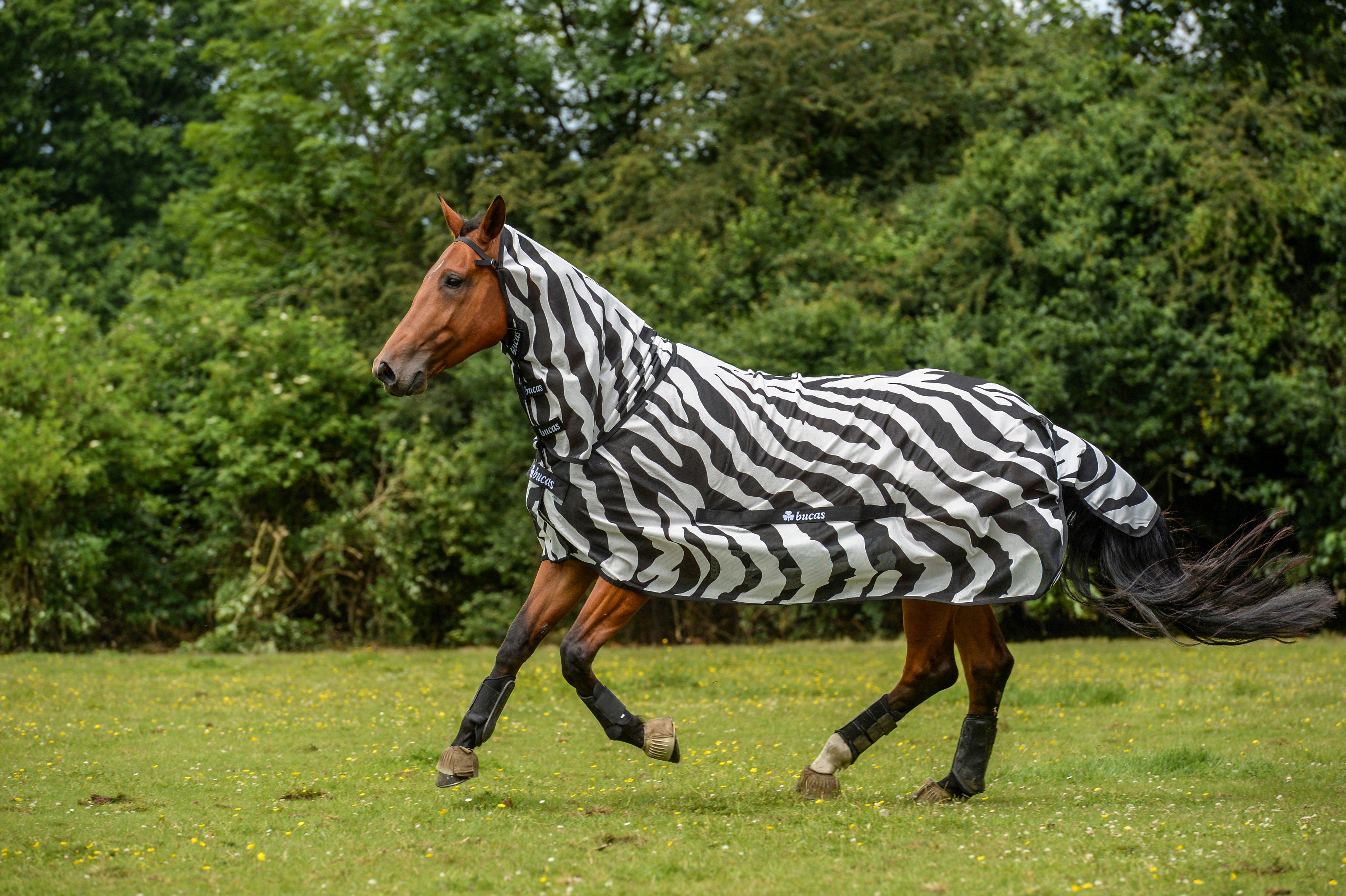 bucks-zebra-fly-sheet-hudson-equine