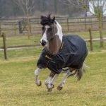 Bucas Irish Turn out Pony