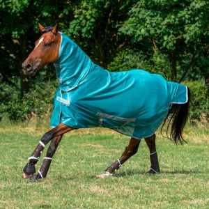 Freedom Fly Rug Lagoon 1384