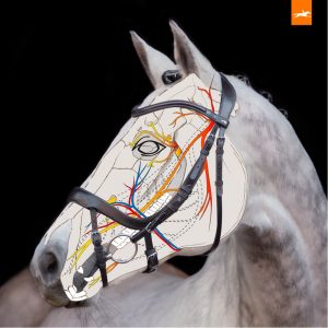 Anatomical Bridles