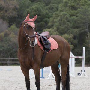 LeMieux-GP-Saddle-Pad-Sorbet-Lifestyle