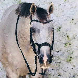 Montar-Monarch-bridle-x3