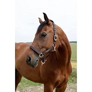 GoLeyGo-Headcollar-Brown-Light-Blue-2