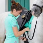 LeMieux-Mint-Polo-Shirt-Lifestyle-Image