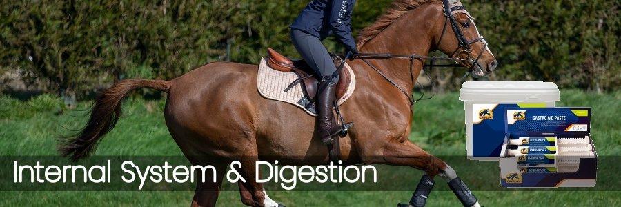 Internal System & Digestion