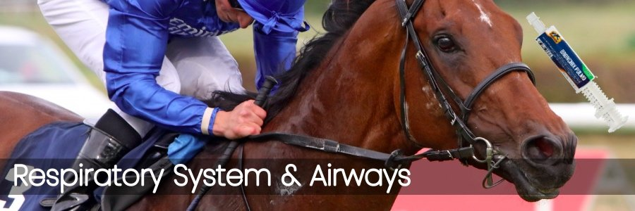 Respiratory System & Airways