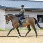 LeMieux-Suede-Saddle-Pad-Lifestyle-Image-2