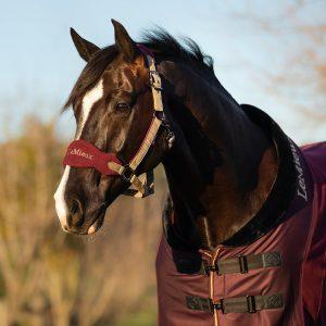 LeMieux-Vogue-Fleece-Hedcollar-Rioja-Lifestyle-Image-1